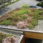 Extensive Dachbegrünungen benötigen nur geringe Pflege.