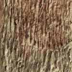 Close-up einer trockenen Lehmfläche erweckt den Eindruck von Baumrinde.