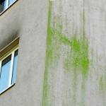 Fassadenkante mit Grünspan auf dem durch Feuchtigkeit belasteten Verputz. Bild: Schwenk