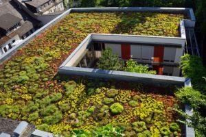 Gründächer im urbanen Raum können dabei helfen, die Folgen des Klimwandels etwas zu mildern. Bild: miss mafalda / stock.adobe.com