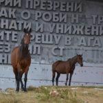 Wildpferde vor dem Buzludzha-Monument.