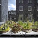 Pflanzen auf dem Dach