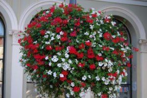 Das niederländische Unternehmen Flower & Shower bietet bienenfreundliche Blumen für den städtischen Raum an. Bild: Flower & Shower