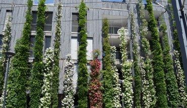 Fassadenbegrünung an einem Stadthaus in Freiburg. Bild: BuGG