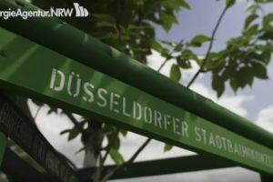 Zukunftsbäume beim Stadtbaumkonzept in Düsseldorf