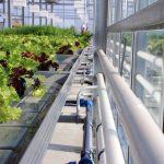 Auf dem Ebbe-Flut-Tisch werden Pflanzen zeitgesteuert mit Wasser und Nährstoffen versorgt. Bild: Fraunhofer UMSICHT