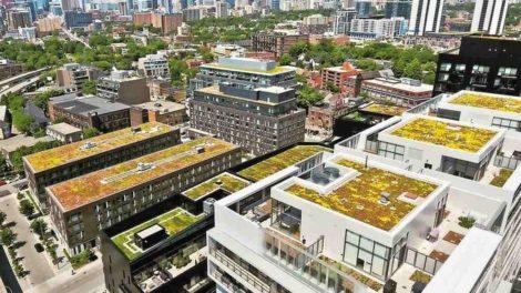 Wohngebiet mit begrünten Flachdächern, Hochhäuser im Hintergrund. Bild: ZinCo Canada