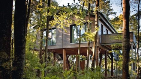 Bodentiefe Holzfenster mit Blick ins Grüne.