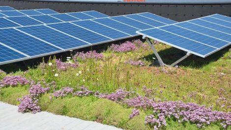 Unterkonstruktion für die Kombination von Dachbegrünung und Photovoltaik