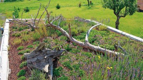 bba0920ZinCo_Biotopholz.jpg