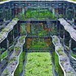 Begrünter Innenhof mit großflächiger Verglasung. Bild: Harderstorfer/Optigrün