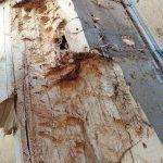 Feuchtigkeit war in die Holzkonstruktion eingedrungen und gefährdete die Stabilität des Tragwerks. Bild: Architekten Lammers PartGmbB; Kiel