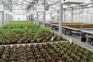 urbane Landwirtschaft auf dem Dach