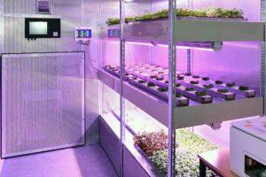 vertikale Kultivierung von Pflanzen im Innenraum im Rahmen der Bioökonomie